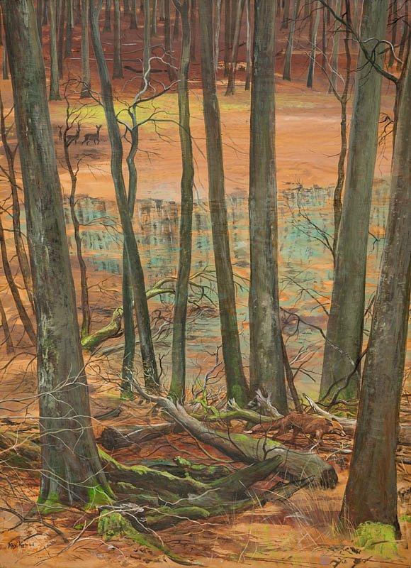 Waldtümpel Nationalpark Jasmund