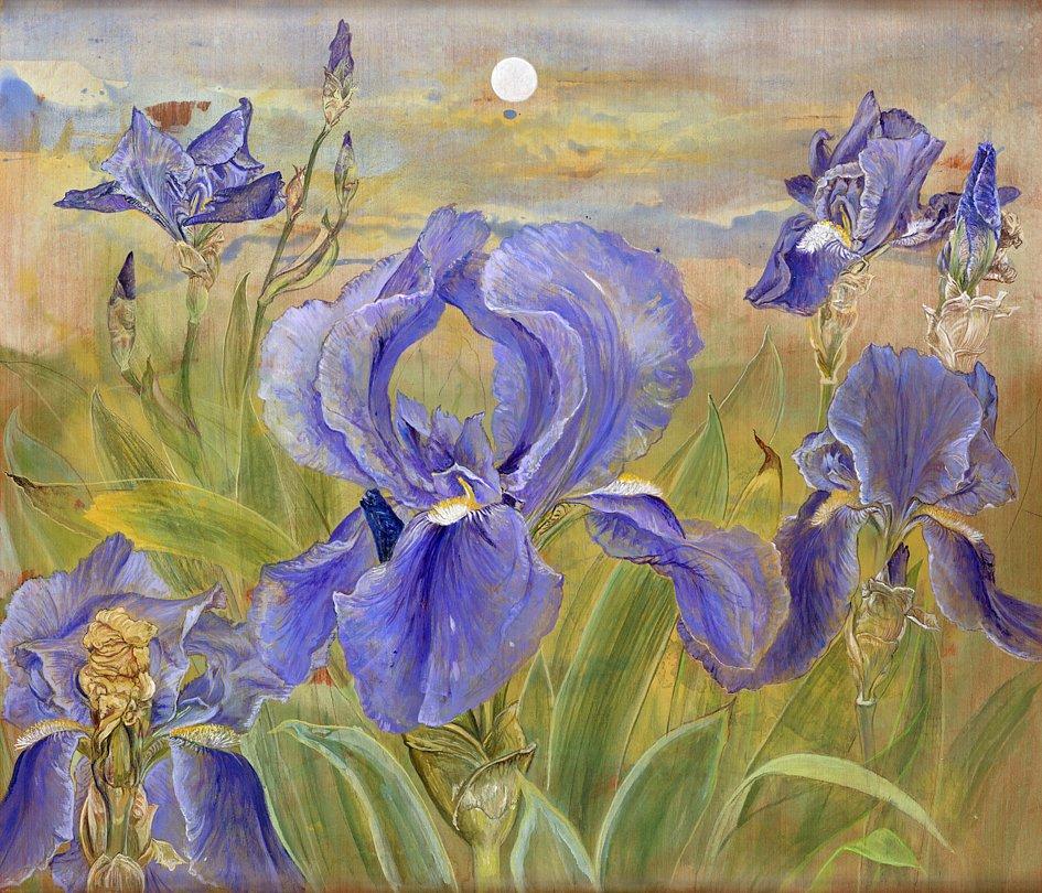 blaue Iris